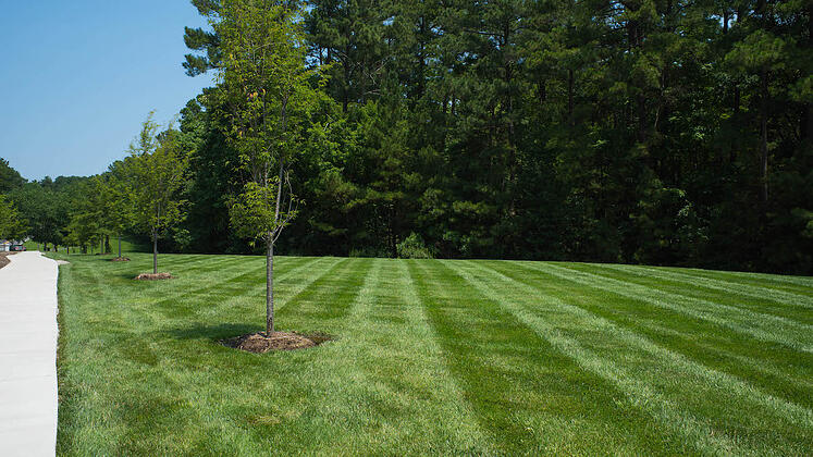 New sod on a commercial property in North Carolina