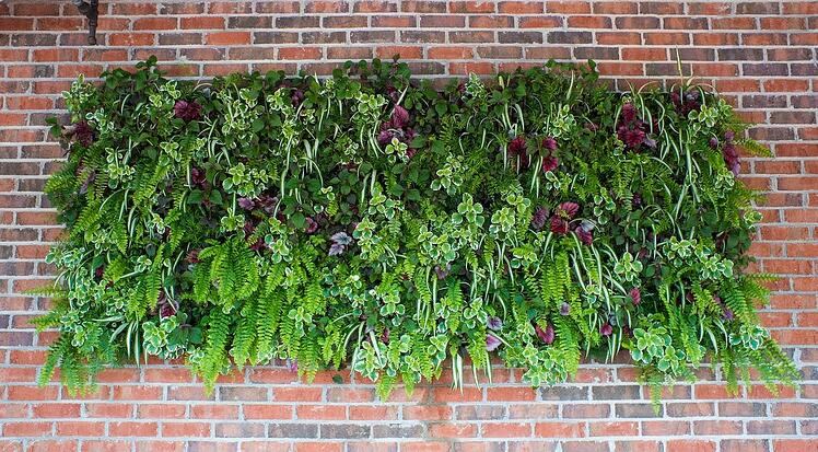 a beautiful living wall in North Carolina