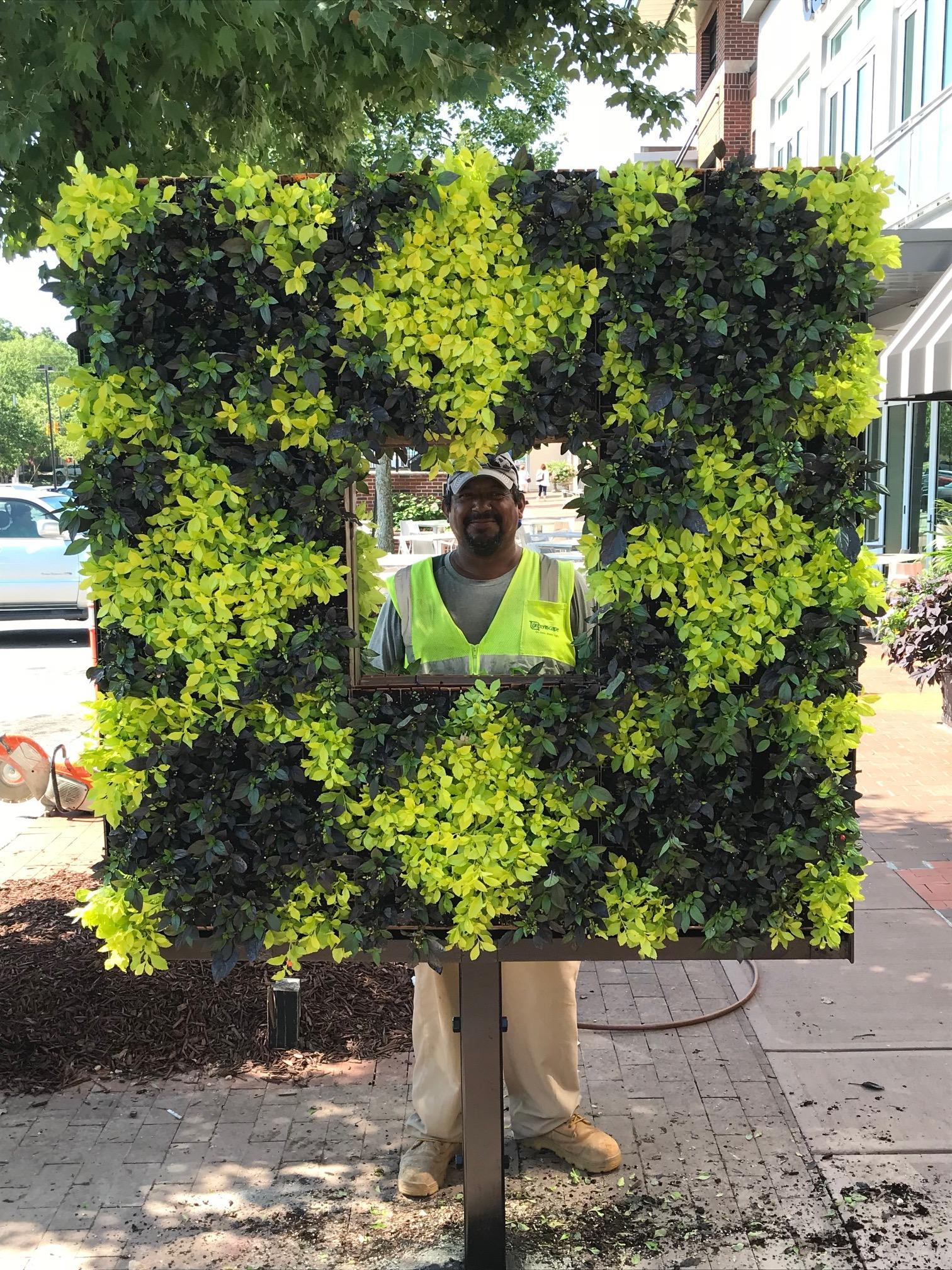 Living wall at Cameron Village