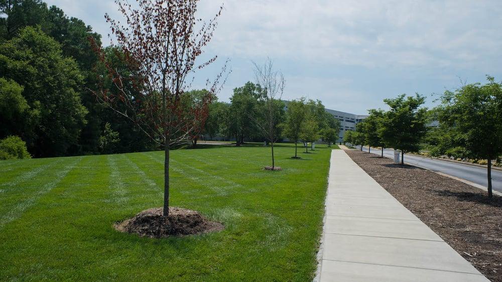 mulch around retail walkway and trees