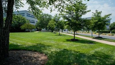commercial landscape with fertilized grass