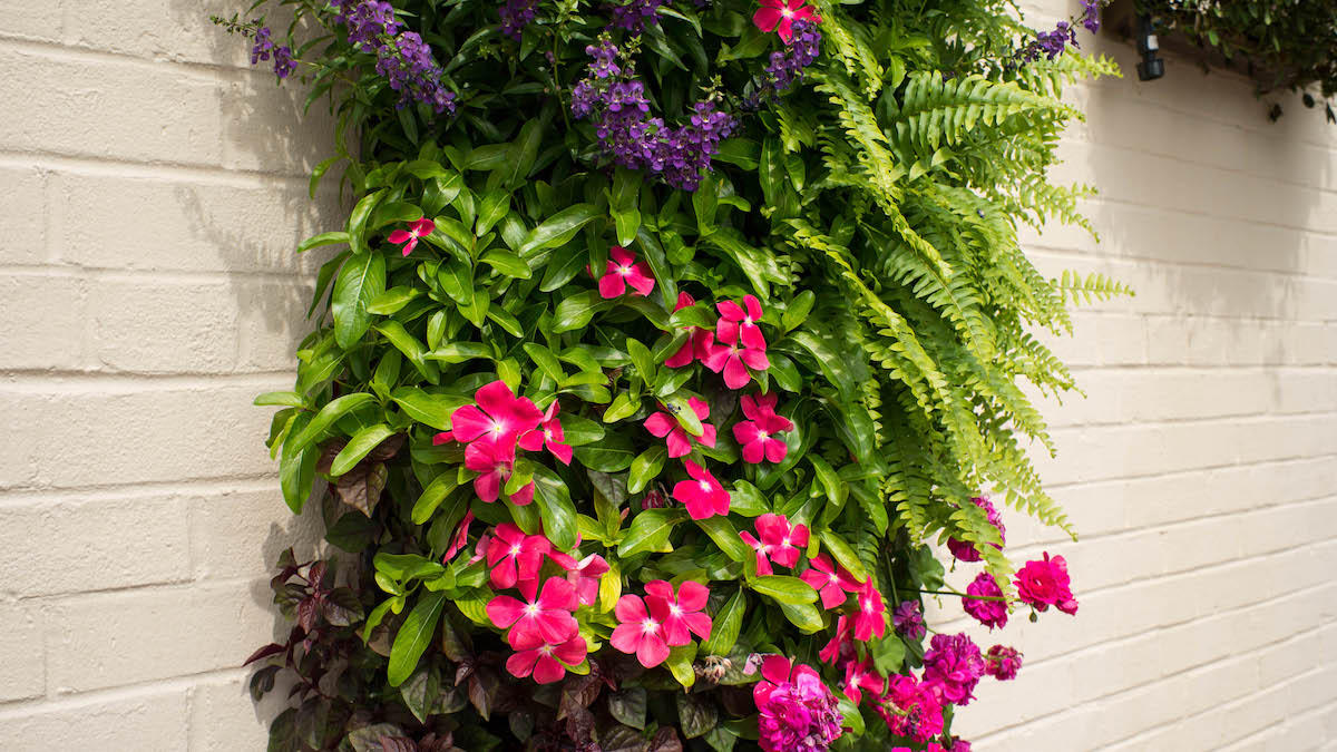 living wall in nc