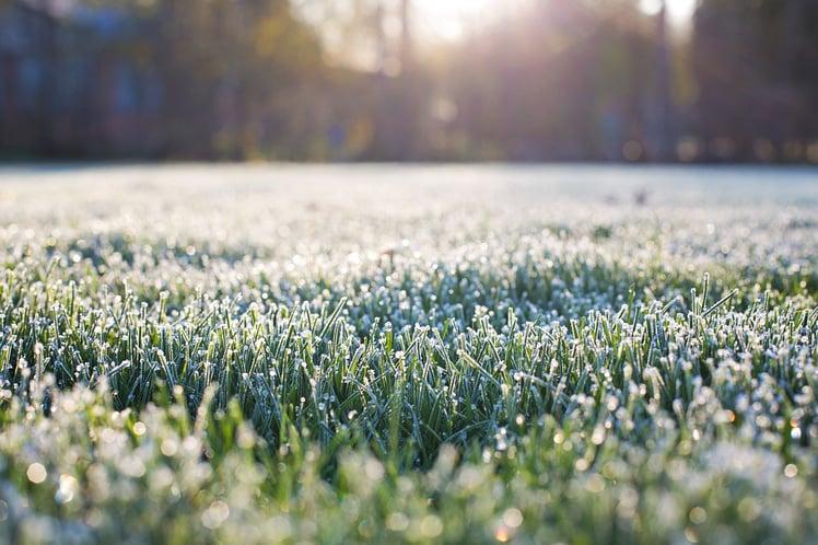 frost-on-grass-1358926_1280.jpg