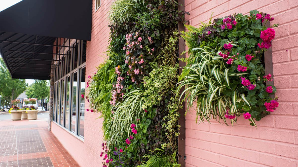 how much does a living wall cost
