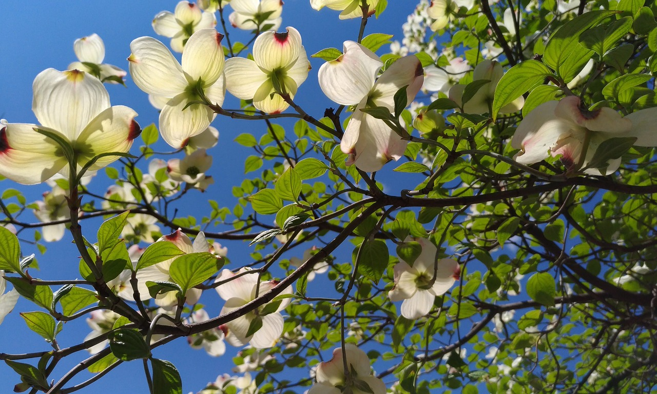 The Best Trees For North Carolina (Shade, Flowering & Privacy)