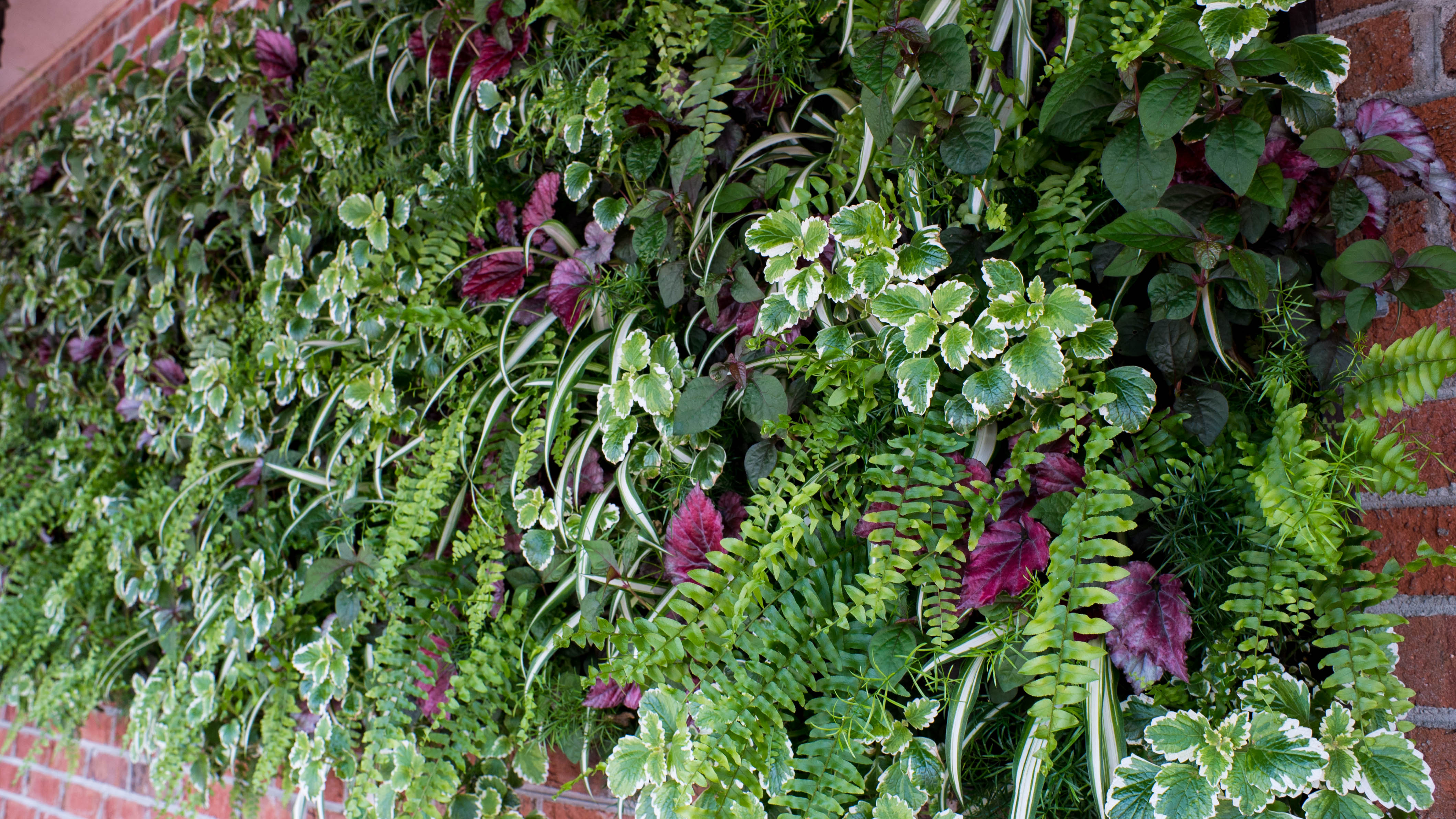 amazing living walls